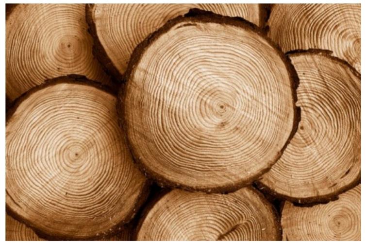 چوب در ساخت پارکت چوبی